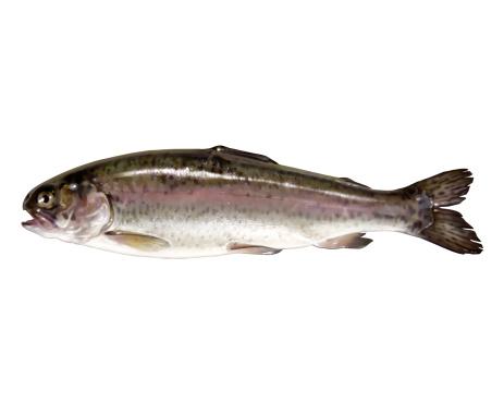Seafood「Rainbow trout」:スマホ壁紙(3)