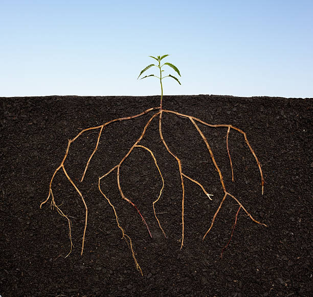 Plant seedling growing with extensive roots.:スマホ壁紙(壁紙.com)