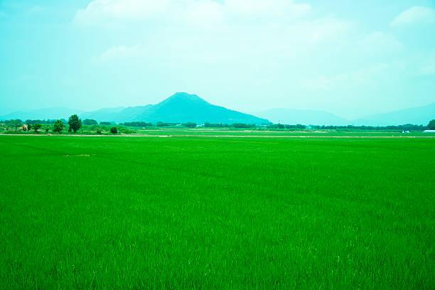 Rice field and Mt. Yamamoto in summer:スマホ壁紙(壁紙.com)