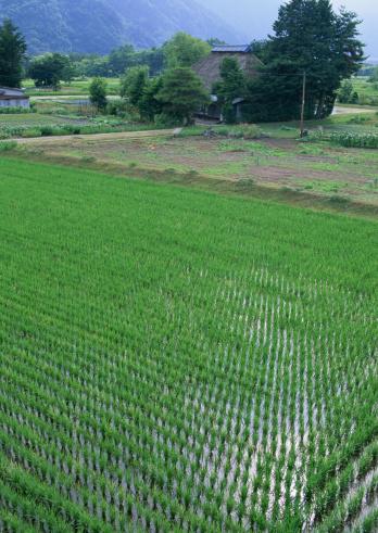 春「Rice Field」:スマホ壁紙(7)