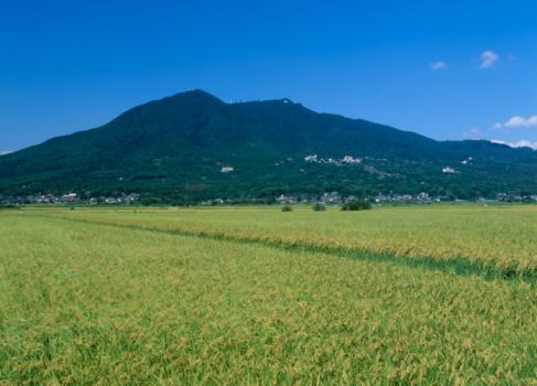 Ibaraki Prefecture「Rice Field, Tsukuba, Ibaraki, Japan」:スマホ壁紙(16)
