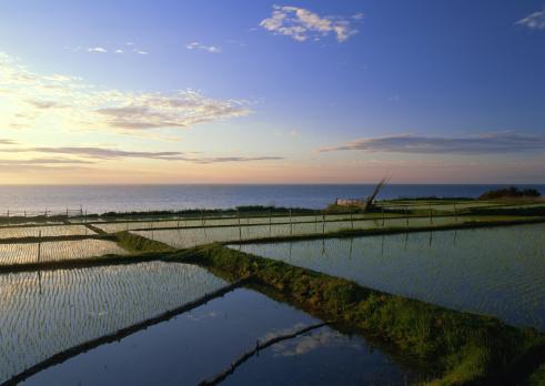 春「Rice Field」:スマホ壁紙(3)