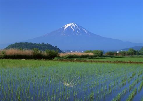 Grove「Rice field and Mt. Fuji」:スマホ壁紙(13)