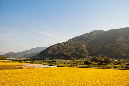 秋「Rice field and mountain」:スマホ壁紙(15)