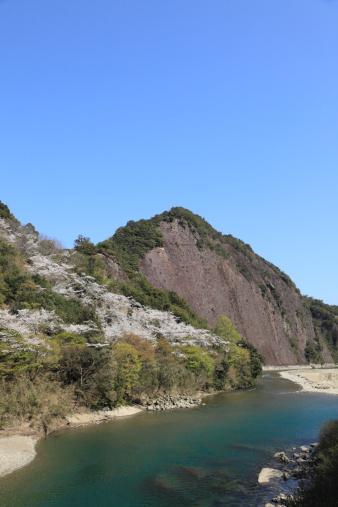 Cherry Blossom「Koza River and Cherry Blossoms, Kozagawa, Higashimuro, Wakayama, Japan」:スマホ壁紙(7)