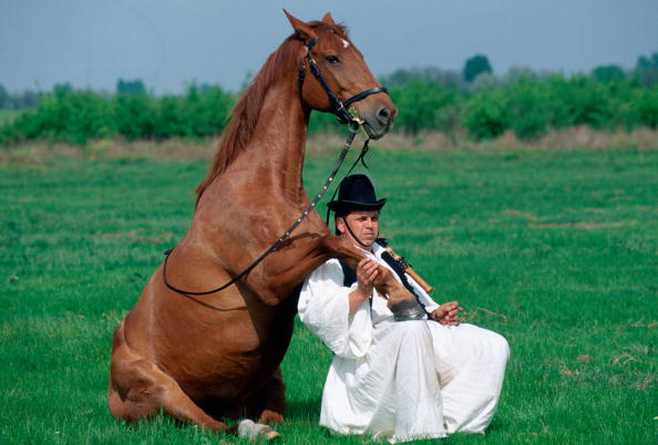 chestnut「Hungarian Cowboy and Horse」:写真・画像(15)[壁紙.com]