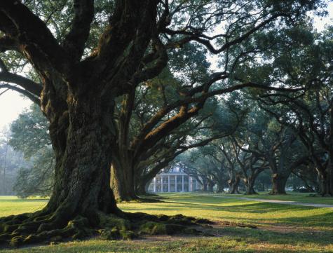 Treelined「USA, Louisiana, large trees in front of plantation」:スマホ壁紙(9)