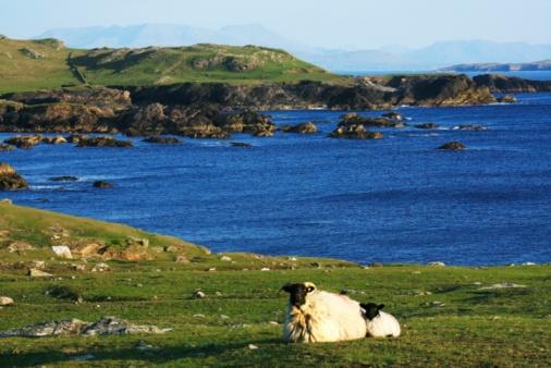 アキル島「Sheep, Achill Island, County Mayo, Ireland」:スマホ壁紙(2)