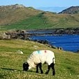 Achill Island壁紙の画像(壁紙.com)