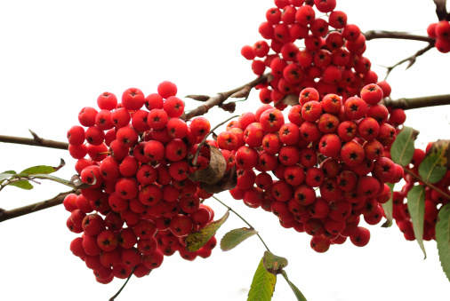 Rowanberry「rowan」:スマホ壁紙(8)