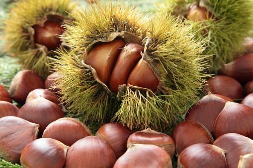 栗「Chestnuts」:スマホ壁紙(13)