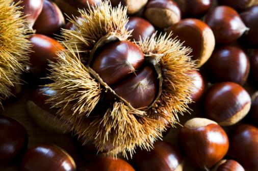 栗「Chestnuts」:スマホ壁紙(16)