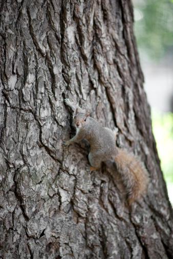 Squirrel「Squirrel」:スマホ壁紙(8)
