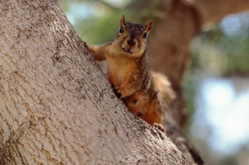 リス「squirrel」:スマホ壁紙(16)