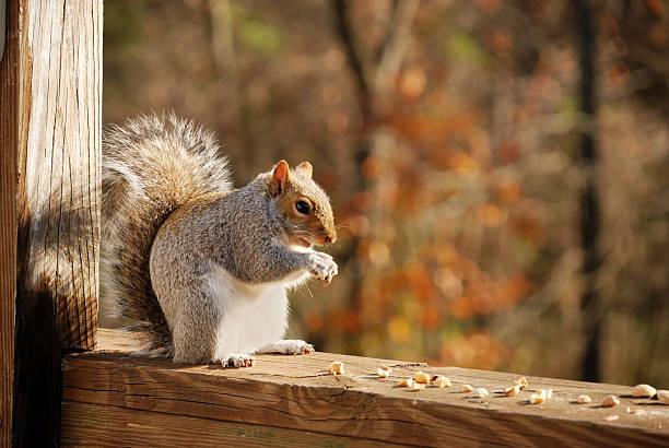 Squirrel:スマホ壁紙(壁紙.com)