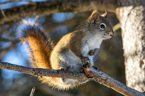 Squirrel「squirrel」:スマホ壁紙(17)