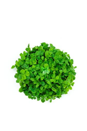 四葉のクローバー「four leaves clover  in clovers」:スマホ壁紙(19)