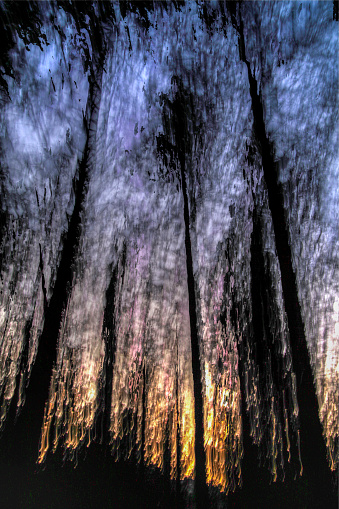 Defocus「Motion blurred trees in a forest」:スマホ壁紙(10)