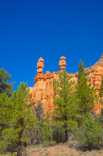 Sunlight「High rock/foliage color contrast in Red Canyon, Utah.」:スマホ壁紙(19)