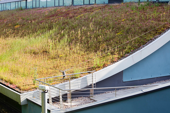 Grass Family「A green roof on Lakeland's flag ship store in Windermere, Cumbria, UK.」:写真・画像(0)[壁紙.com]