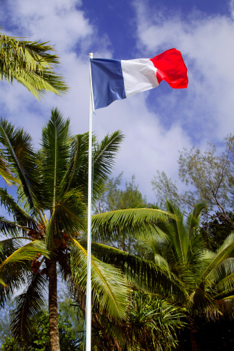 French Overseas Territory「French flag under the coconut trees」:スマホ壁紙(6)