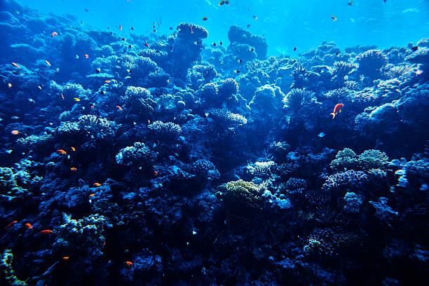 tropical sea life, soft coral:スマホ壁紙(壁紙.com)