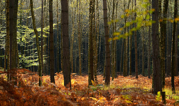 Autumn In The UK:ニュース(壁紙.com)