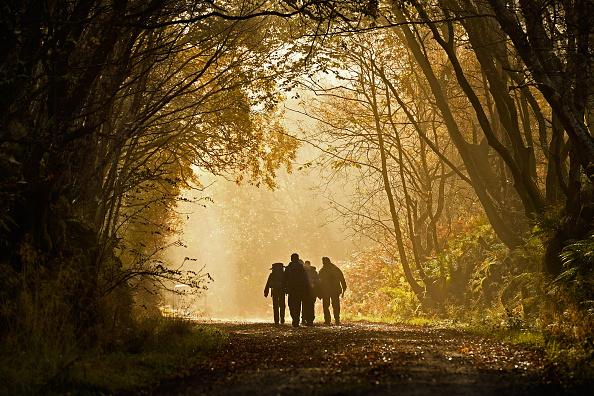 紅葉「Beautiful Autumn Colours Are Seen Across Loch Lomond」:写真・画像(17)[壁紙.com]