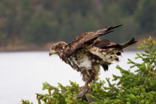 Eyesight「An eagle」:スマホ壁紙(9)