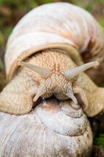 snails「Snail sex」:スマホ壁紙(6)