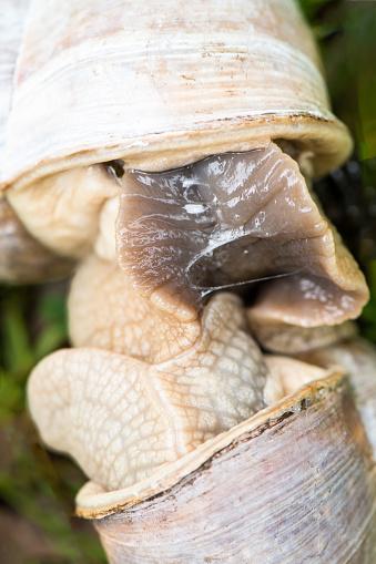 snails「Snail sex」:スマホ壁紙(5)
