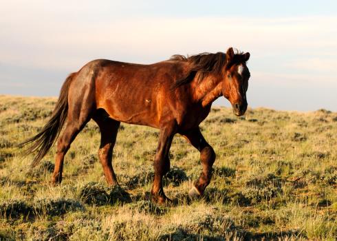 Stallion「Wyoming Wild Stallion Trotting at Sunset」:スマホ壁紙(3)
