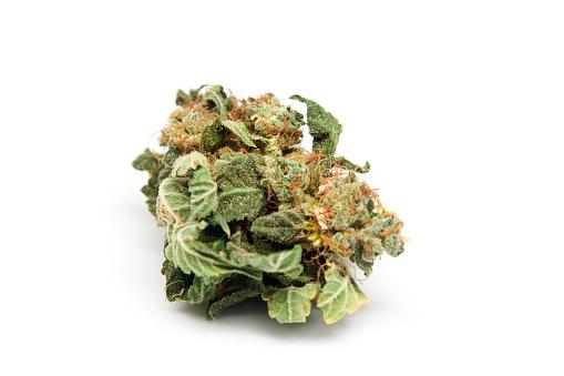 Bud「Marijuana from Holland」:スマホ壁紙(12)