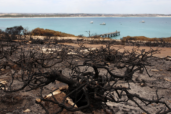 Kangaroo Island「Kangaroo Island Farmers Count Livestock Losses As Bushfires Continue To Burn」:写真・画像(10)[壁紙.com]