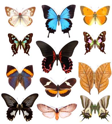 Morpho Butterfly「Isolated butterflies」:スマホ壁紙(12)