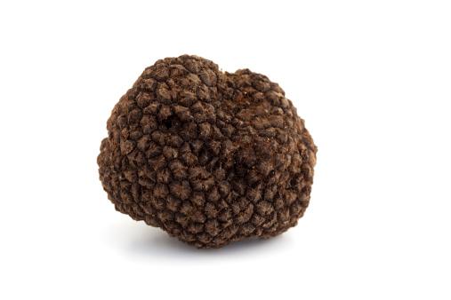 Edible Mushroom「black truffle」:スマホ壁紙(19)
