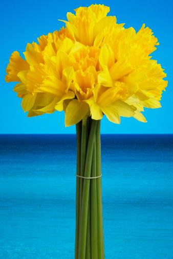 水仙「Daffodils against blue sky」:スマホ壁紙(17)