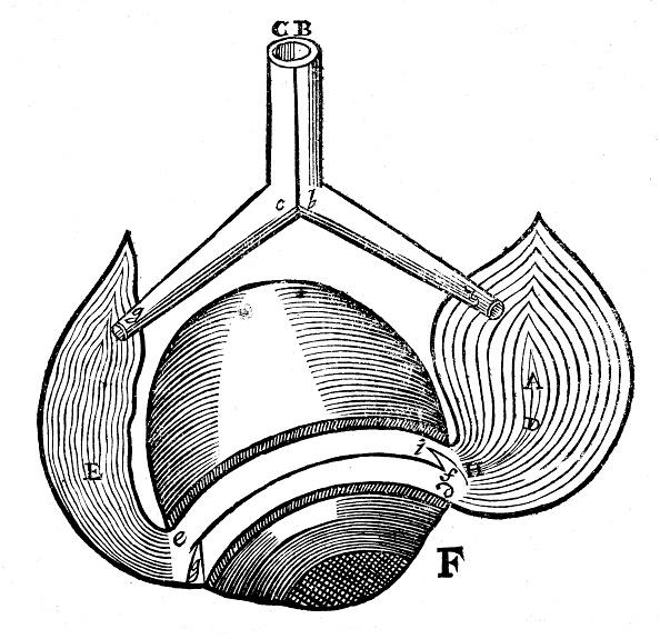 Animal Eye「Descartes' representation of the antagonistic eye muscles, 1692.」:写真・画像(18)[壁紙.com]