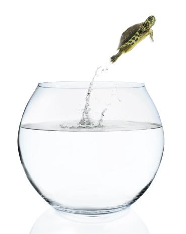 Fishbowl「Turtle Jumping Out of Fish Bowl」:スマホ壁紙(15)