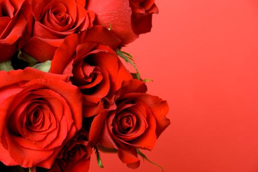 薔薇「バレンタインデーのボーダー」:スマホ壁紙(2)