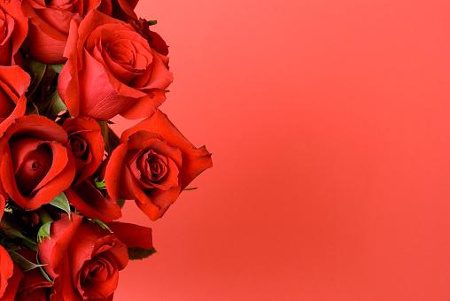 薔薇「バレンタインデーのボーダー」:スマホ壁紙(17)