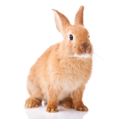 うさぎ「かわいい小さな bunny」:スマホ壁紙(12)