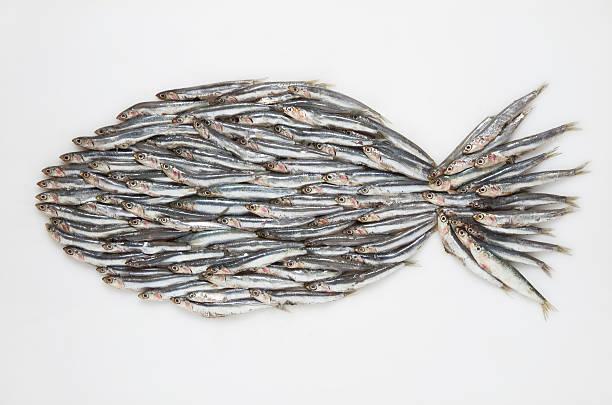 Big fish formed of anchovies (Engraulidae) on white ground:スマホ壁紙(壁紙.com)