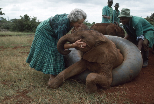 Tom Stoddart Archive「Elephant Conservationist」:写真・画像(9)[壁紙.com]