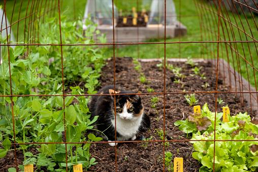 Carefree「Cat resting in garden, Halifax, Nova¬ÝScotia, Canada」:スマホ壁紙(14)