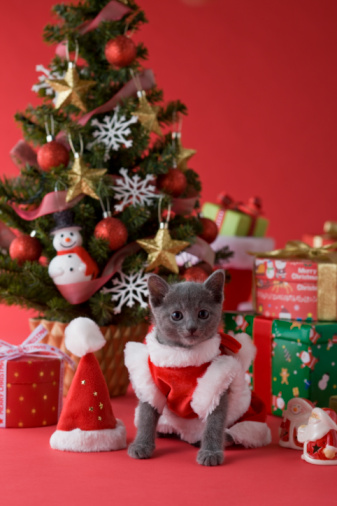 Kitten「Russian Blue Kitten and Christmas」:スマホ壁紙(2)