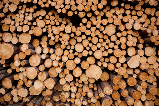 Lumber Industry「Log Pile at Sawmill, Gulliver, Michigan」:スマホ壁紙(8)