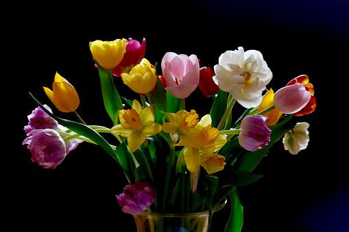 水仙「Tulips and daffodils in vase in front of black background」:スマホ壁紙(0)