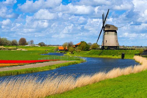 Netherlands「Tulips and Windmill」:スマホ壁紙(11)