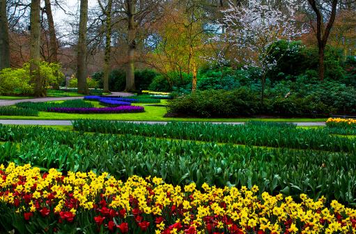 Keukenhof Gardens「Tulips and Daffodils announce spring」:スマホ壁紙(1)